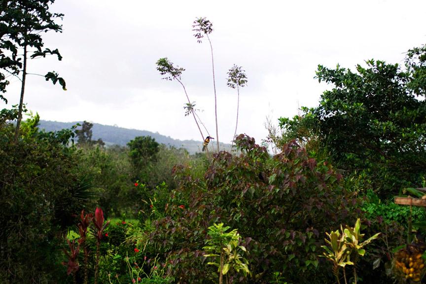 madelene-farin-costa-rica-159.jpg