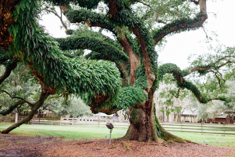 madelene-farin-new-orleans-135.jpg