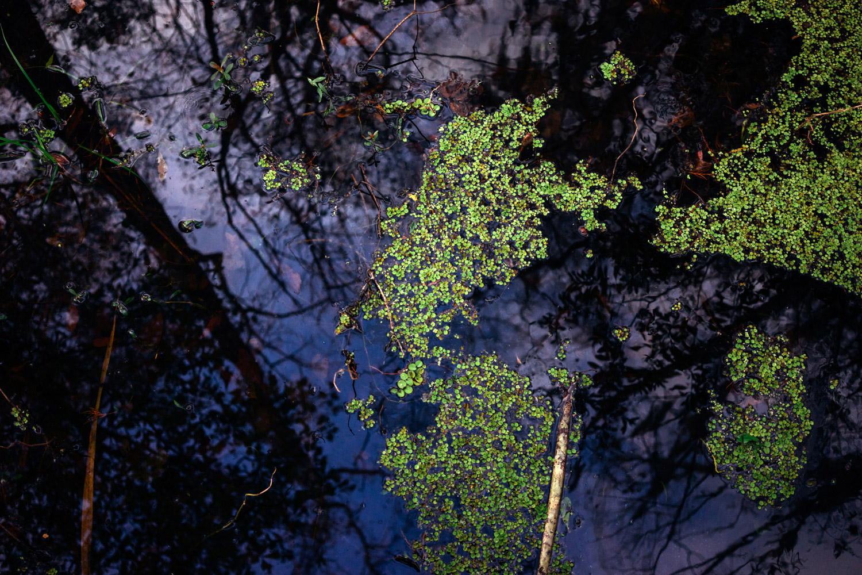 madelene-farin-new-orleans-143.jpg