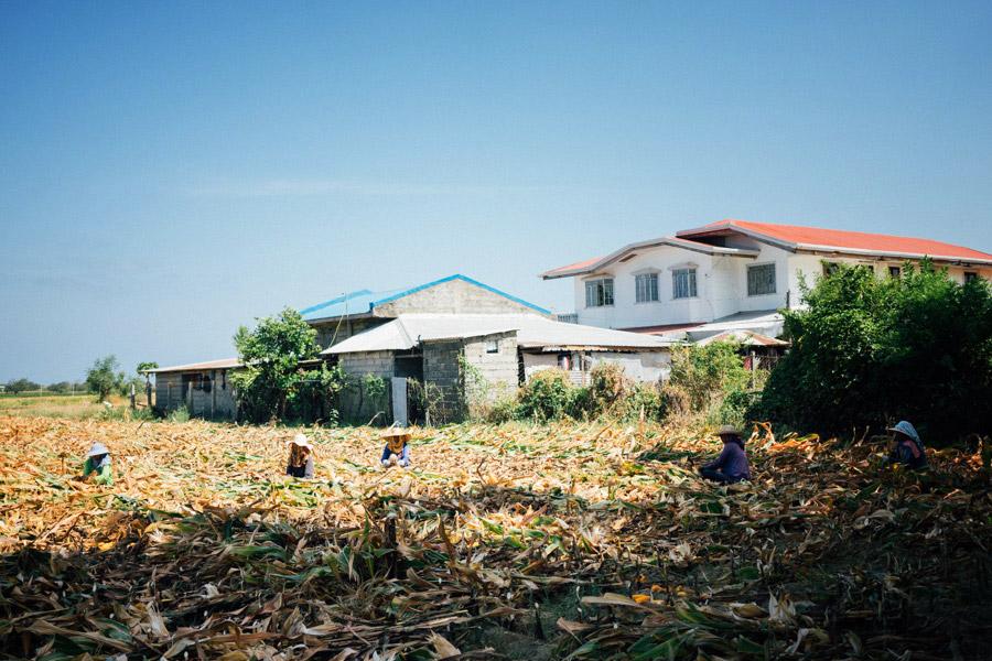 Women farmers in the cornfield behind Auntie Jean's house.