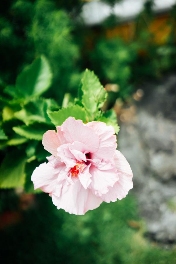 Madelene-Farin-The-Philippines-531.jpg