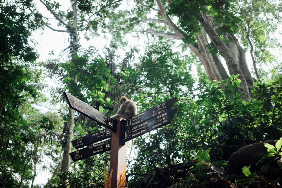 Madelene-Farin-Indonesia-0126.jpg
