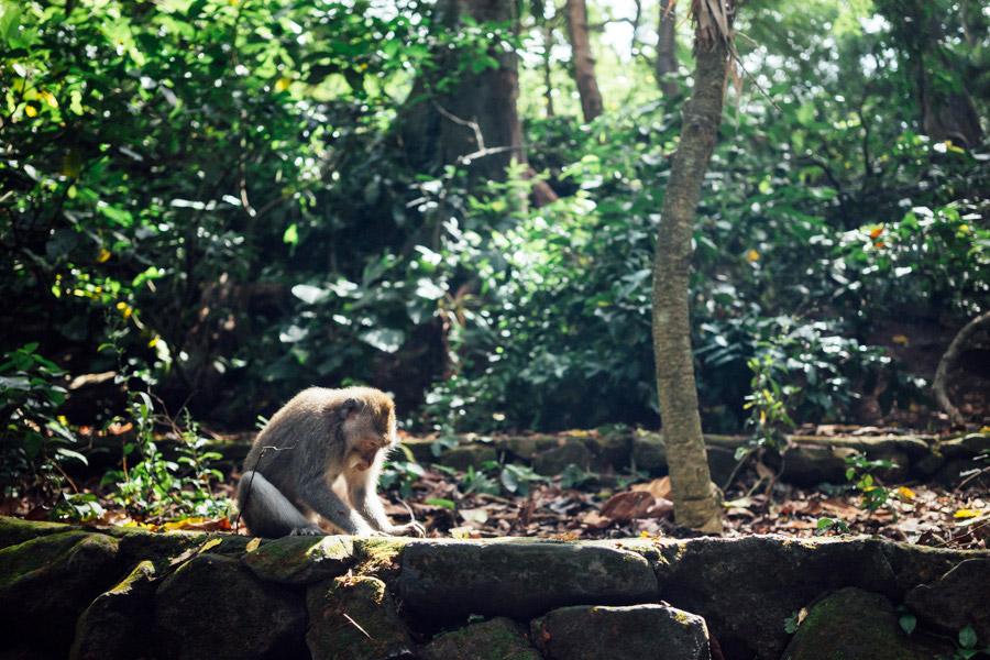 Madelene-Farin-Indonesia-0128.jpg