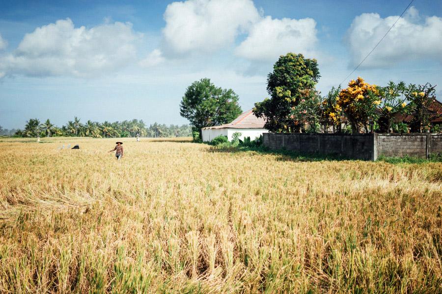 Madelene-Farin-Indonesia-0200.jpg
