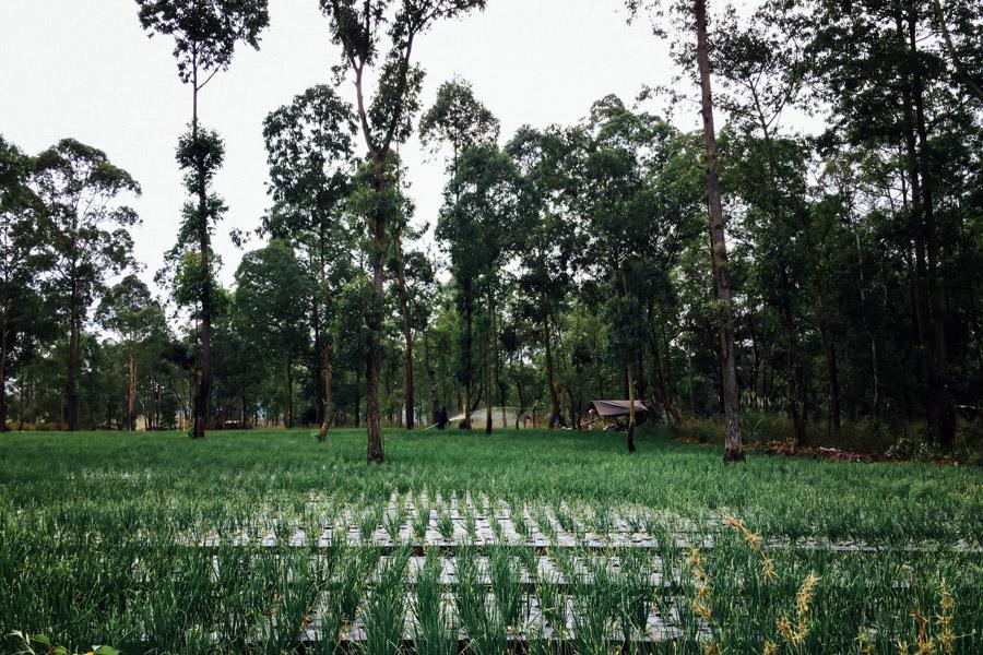 Madelene-Farin-Indonesia-0375.jpg