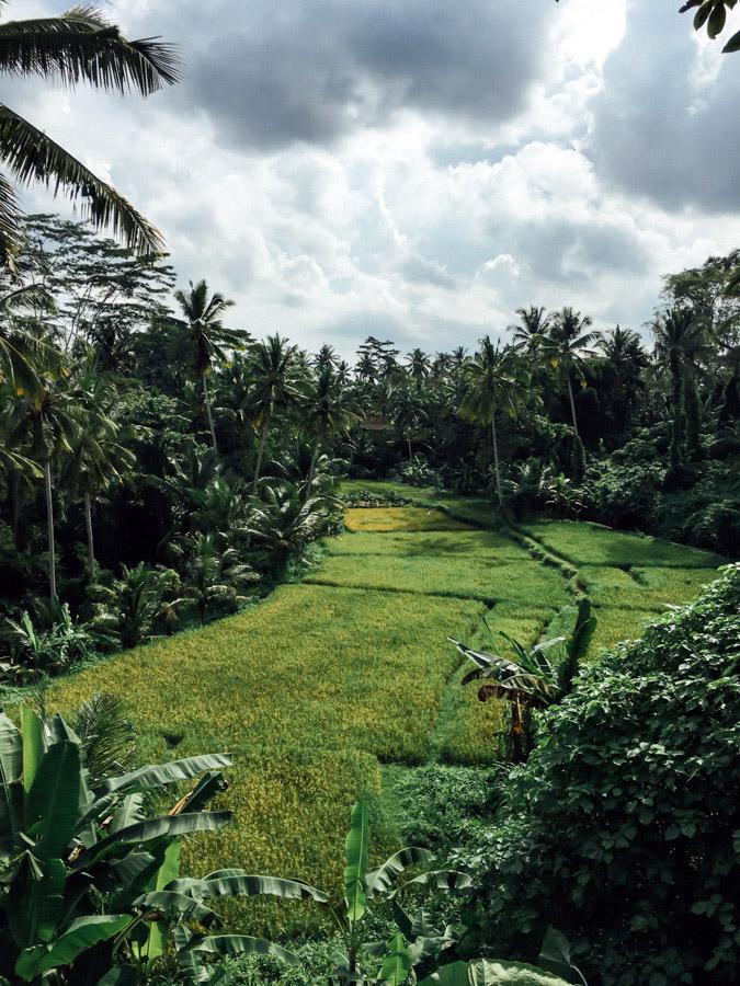 Madelene-Farin-Indonesia-0378.jpg