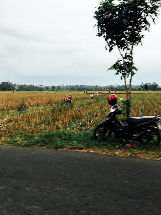 Madelene-Farin-Indonesia-0524.jpg