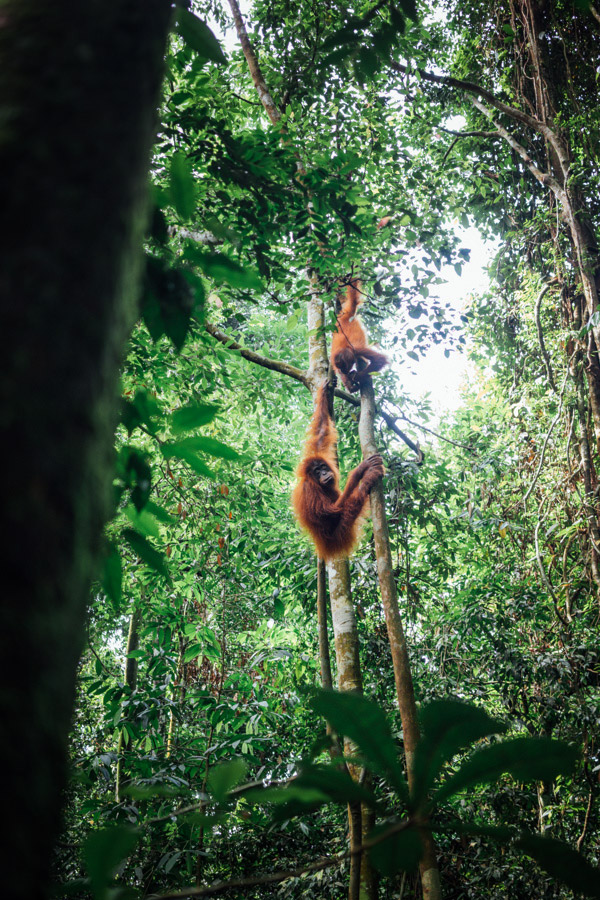 Madelene-Farin-Indonesia-0788.jpg