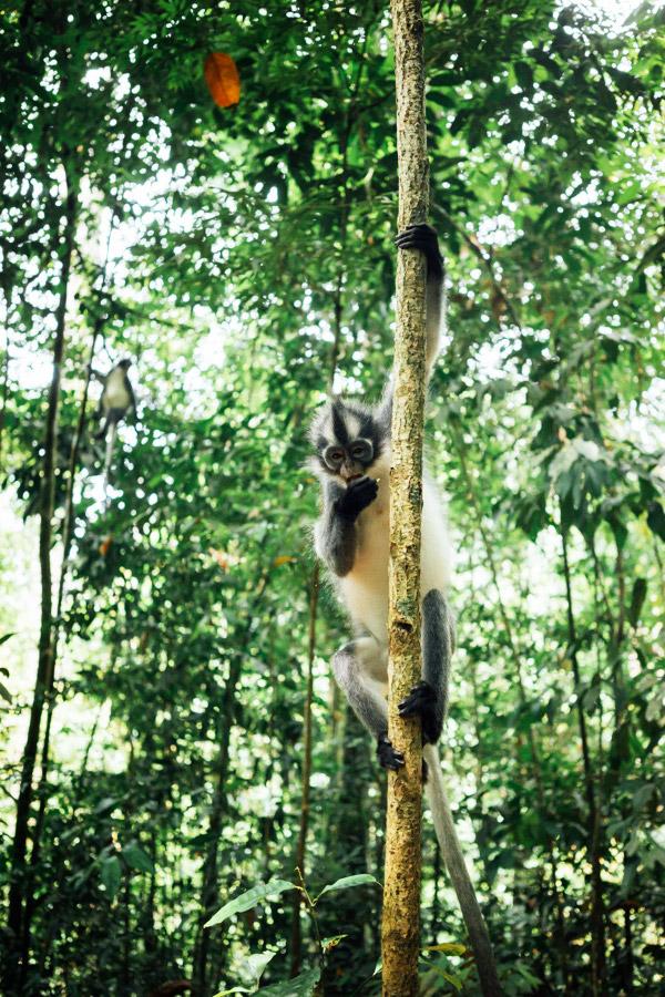 Madelene-Farin-Indonesia-0820.jpg
