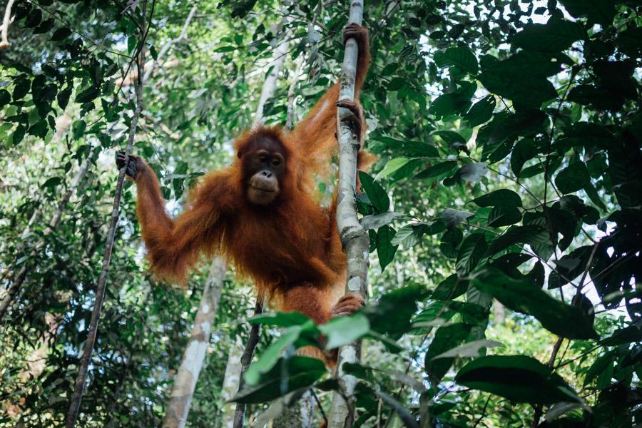 Madelene-Farin-Indonesia-0867.jpg