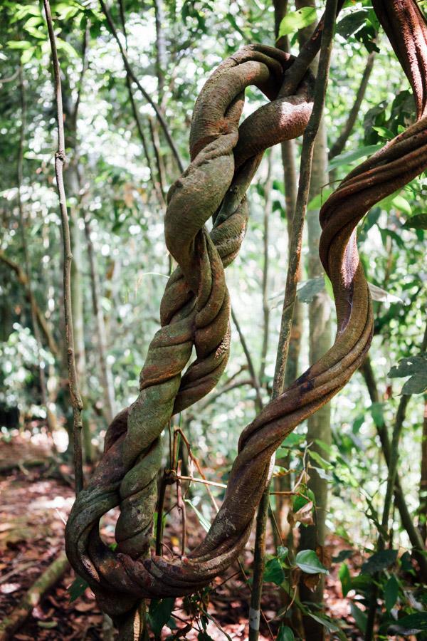 Madelene-Farin-Indonesia-0924.jpg