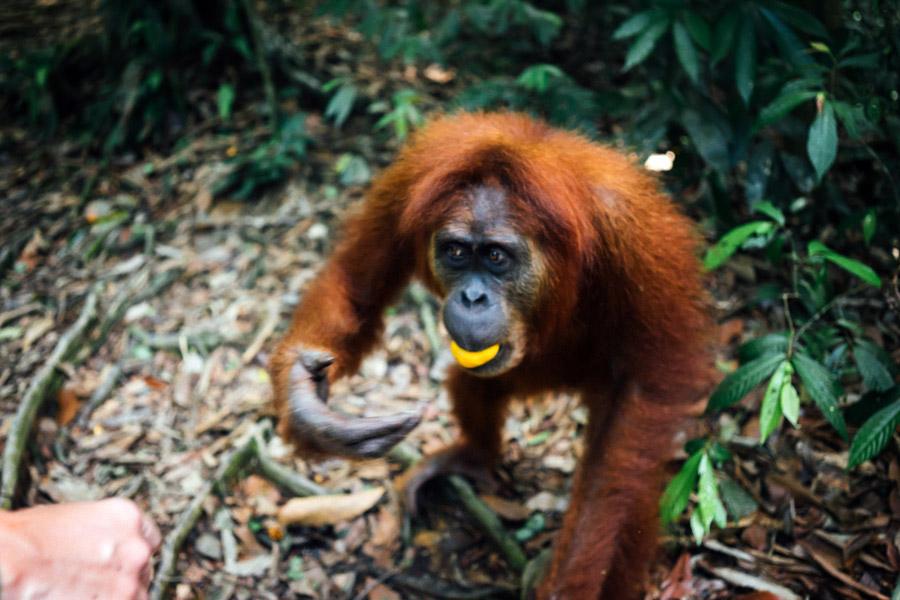 Madelene-Farin-Indonesia-0928.jpg