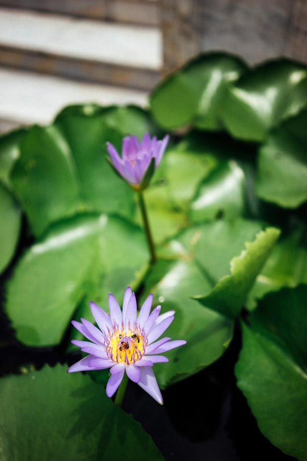 Madelene-Farin-Thailand-035.jpg