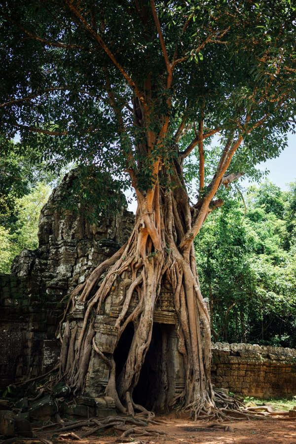 We came to Angkor to see the temples, and it did not disappoint. It's amazing to see so much growth everywhere, finding nature overtaking structures and reclaiming the earth that is rightfully their's.