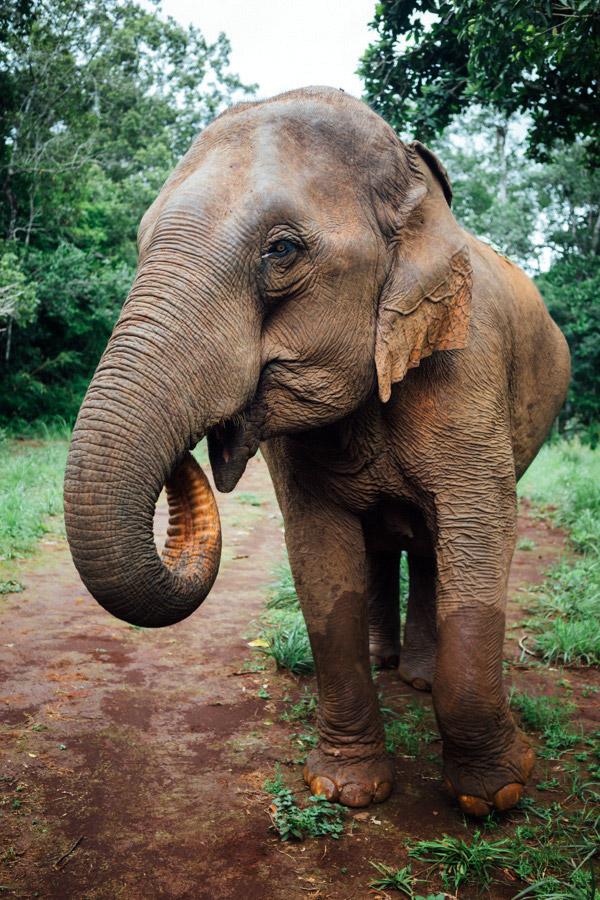 Madelene-Farin-Cambodia-1022.jpg