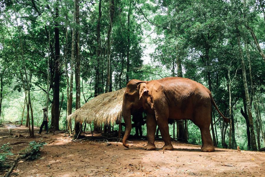 Madelene-Farin-Cambodia-1035.jpg