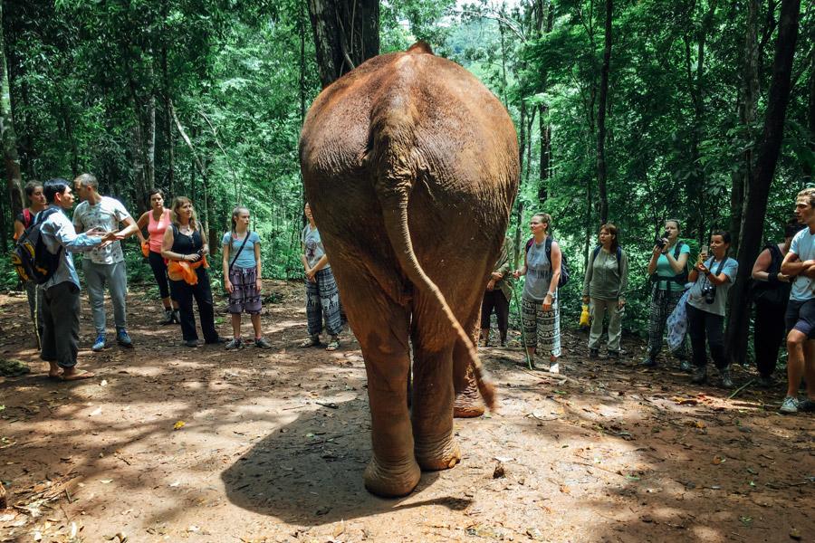 Madelene-Farin-Cambodia-1038.jpg