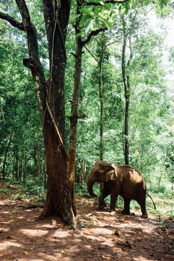 Madelene-Farin-Cambodia-1054.jpg