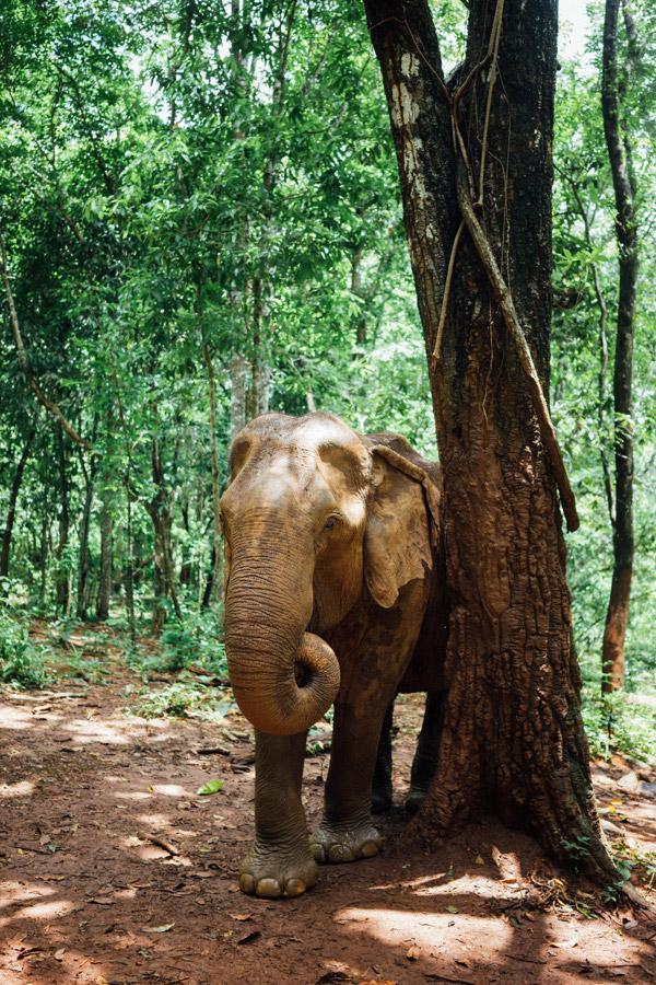 Madelene-Farin-Cambodia-1055.jpg