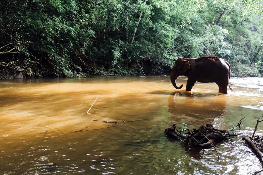 Madelene-Farin-Cambodia-1072.jpg