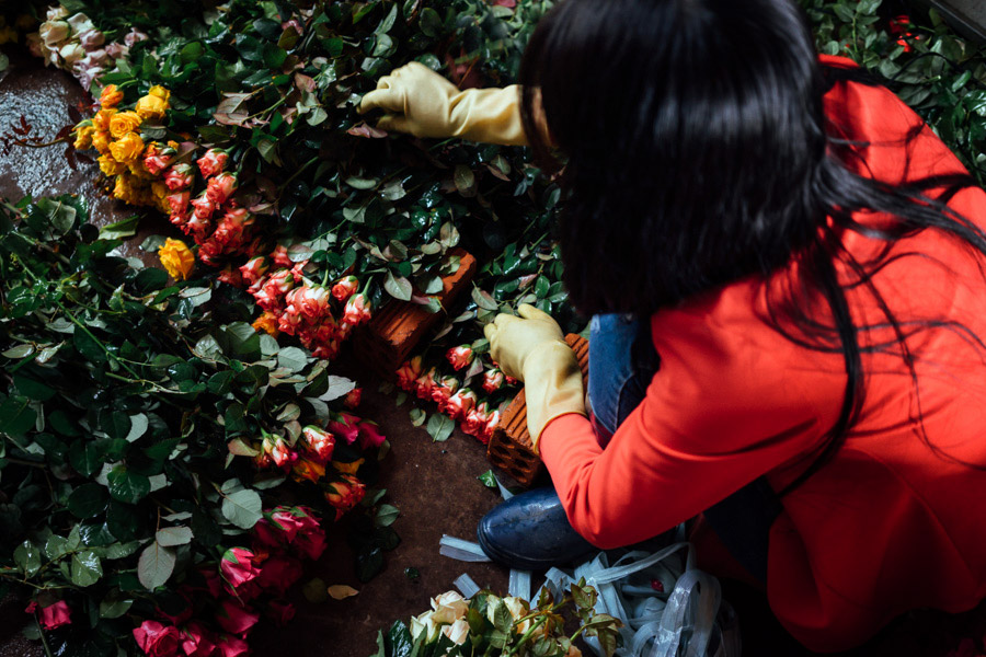 """Just outside the Central Highlands city also known as the """"City of a Thousand Flowers""""are greenhouses full of colorful flowers. The industry is huge here, so we made sure to stop at a rose warehouse to see the beautiful blooms."""