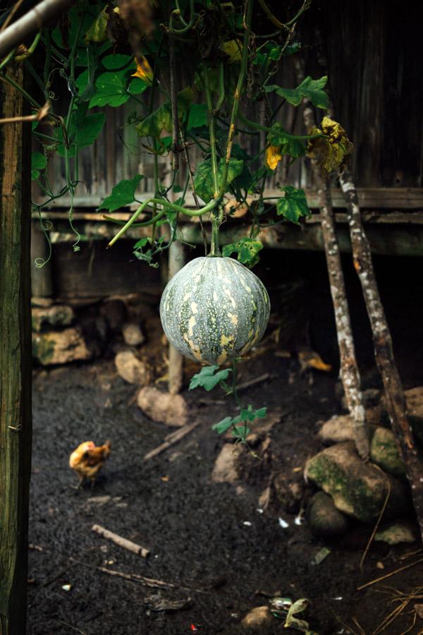 Madelene-Farin-Vietnam-0869.jpg