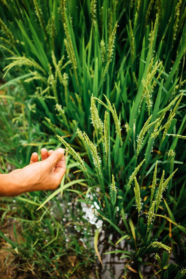 Madelene-Farin-Vietnam-0874.jpg