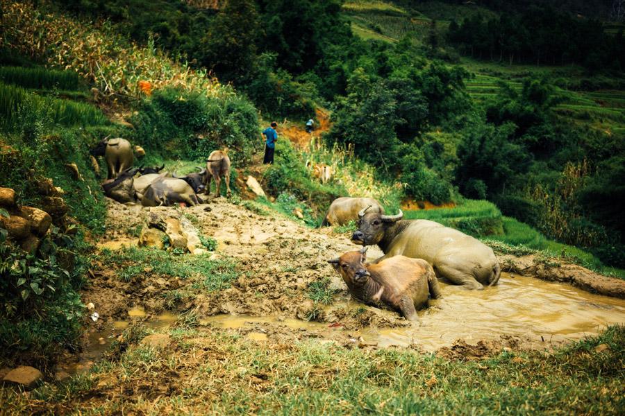 Madelene-Farin-Vietnam-0900.jpg