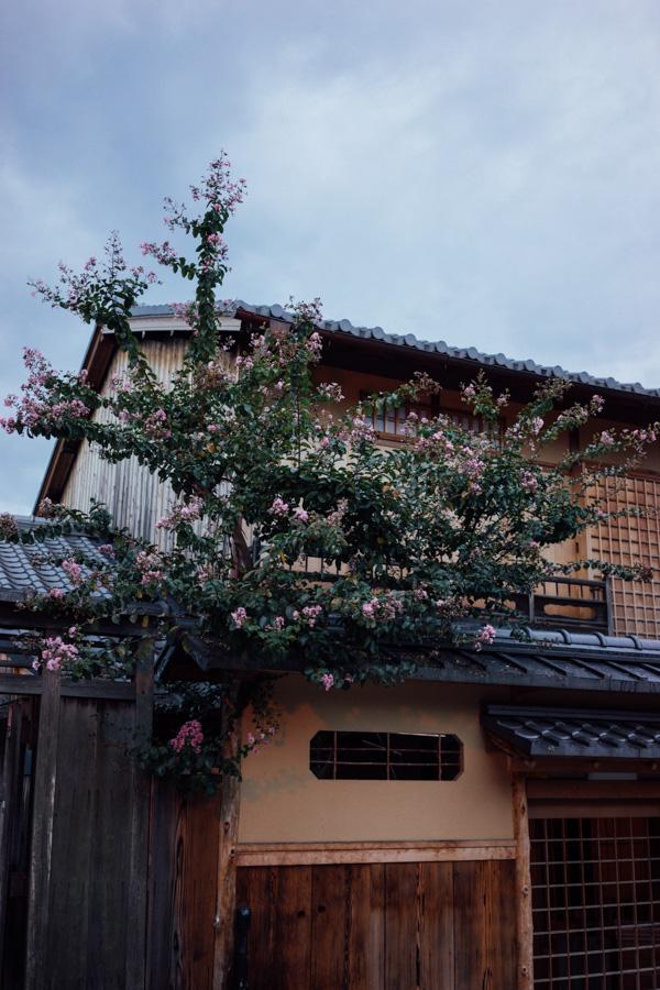 Madelene-Farin-Japan-0297.jpg