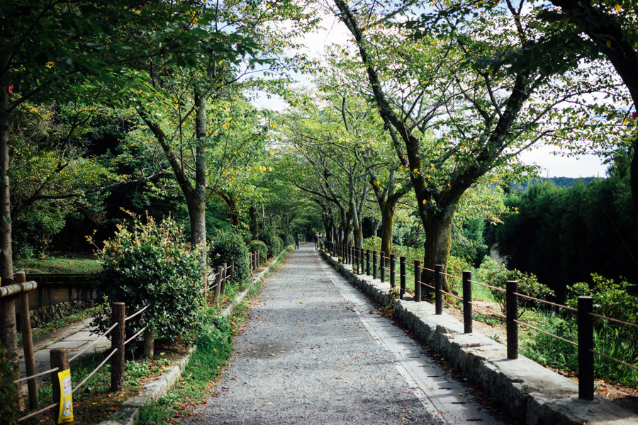 Madelene-Farin-Japan-0407.jpg