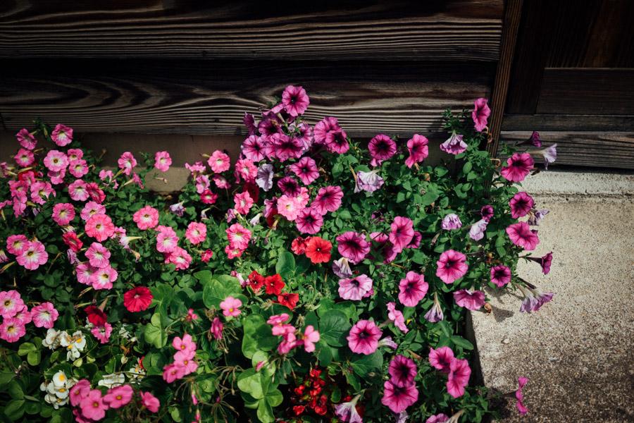 Madelene-Farin-Japan-0457.jpg