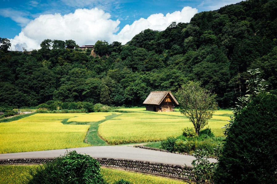 Madelene-Farin-Japan-0534.jpg