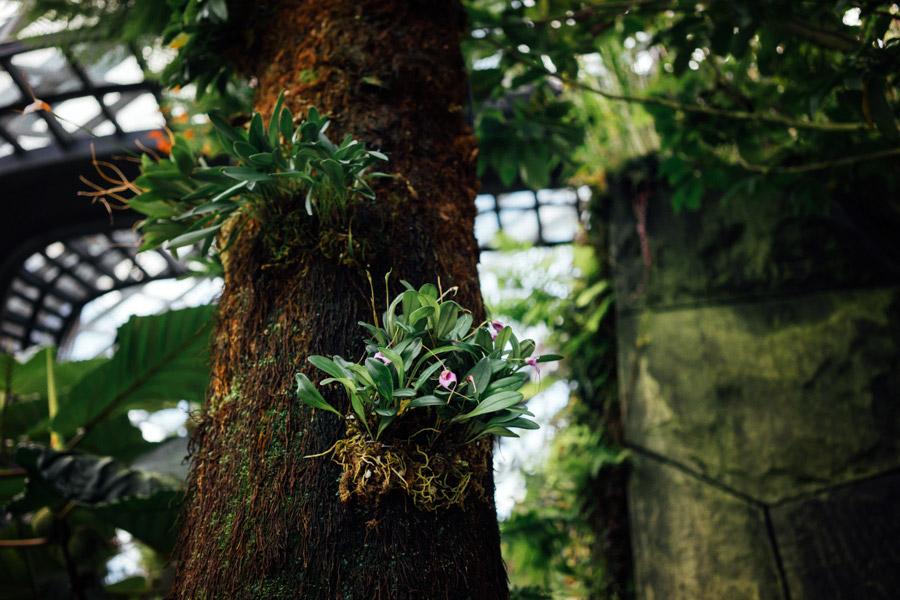 Madelene-Farin-Singapore-0057.jpg