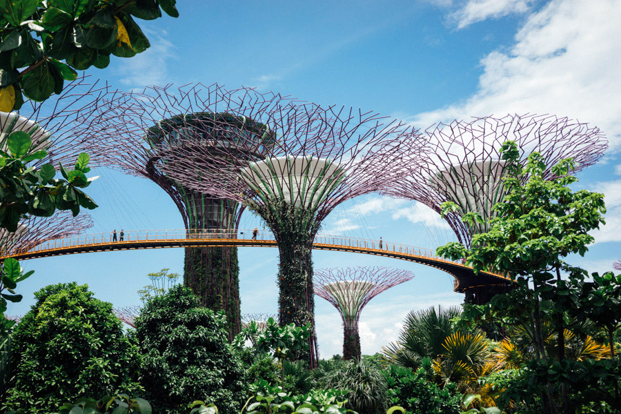 The super grove of solar-powered super trees.
