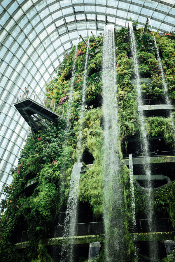 Inside the cool Cloud Forest biodome, a mere 137 kilometers from the equator.