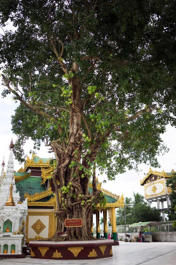 Madelene-Farin-Myanmar-0033.jpg
