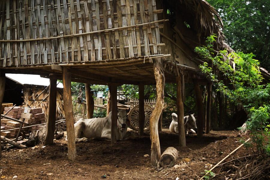 Madelene-Farin-Myanmar-0269.jpg