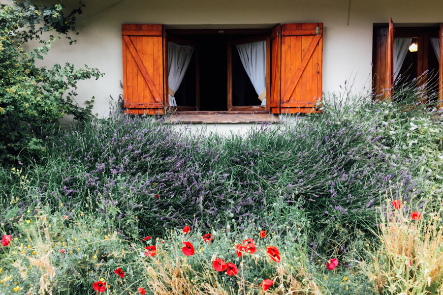 Summertime in a mountain town: colorful flowers, bees, pollen, allergies...