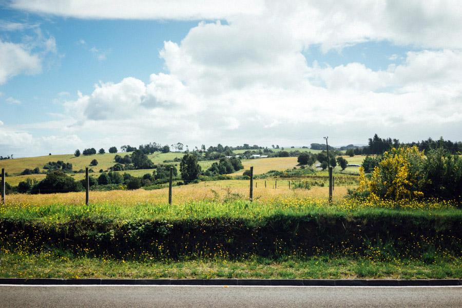Madelene-Farin-Chile-0316.jpg