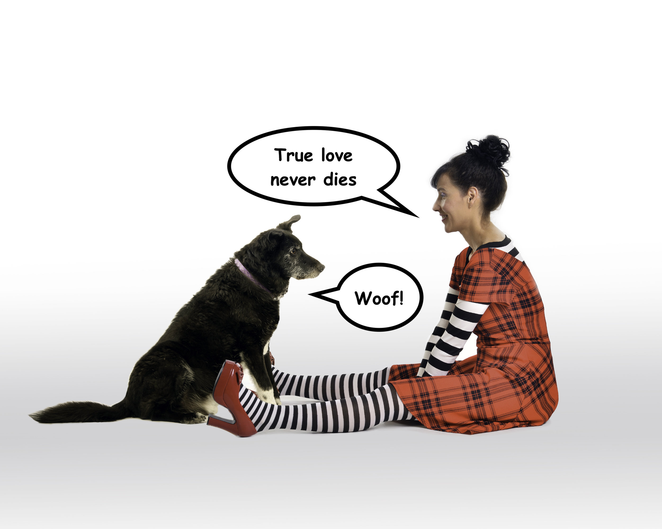 How to receive messages from your pet on the other side | Vanessa Sanddal | Tarot & Spirit Animal Readings | Pet Psychic & Animal Communicator | Missoula, MT