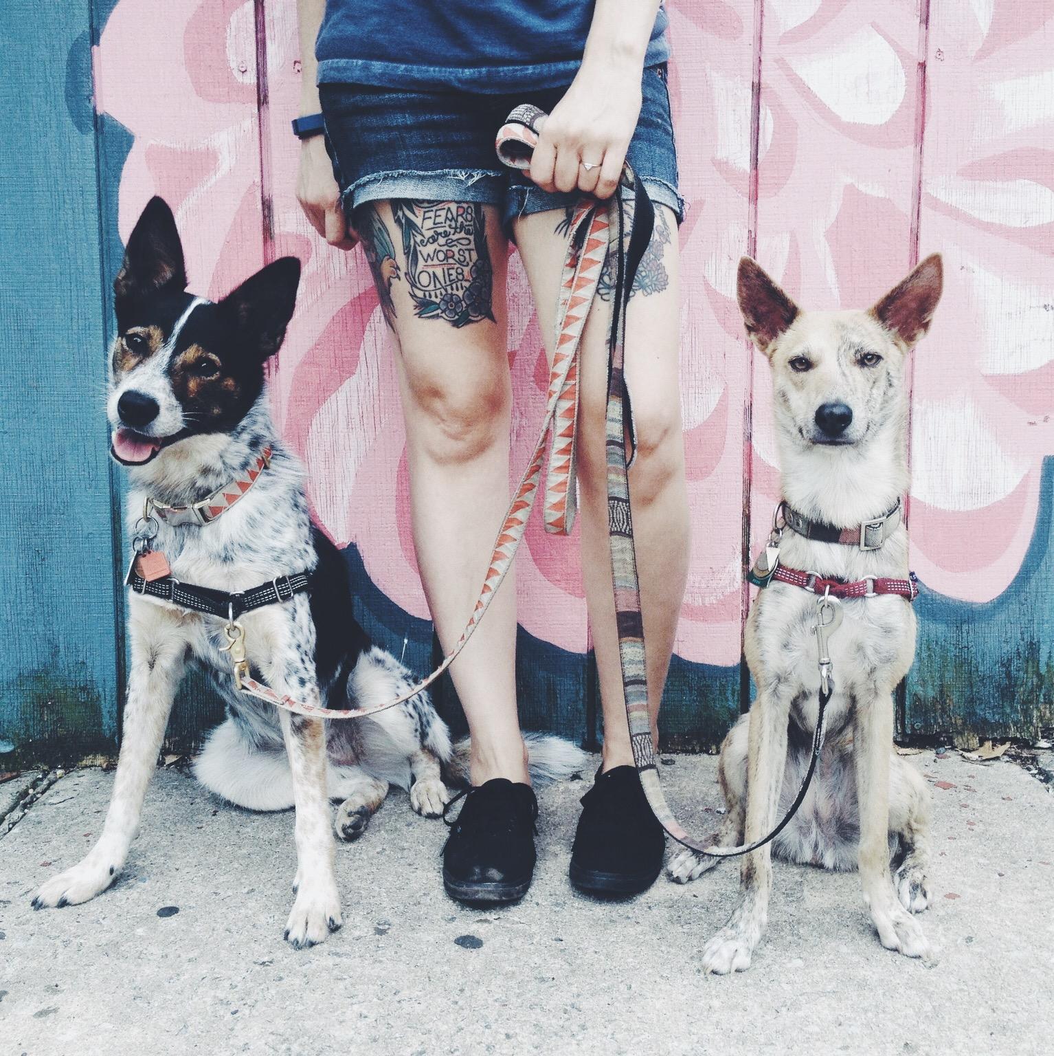 Dith-Dogs.jpg