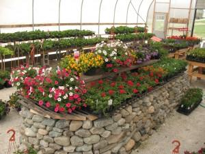 greenhouse relish 008