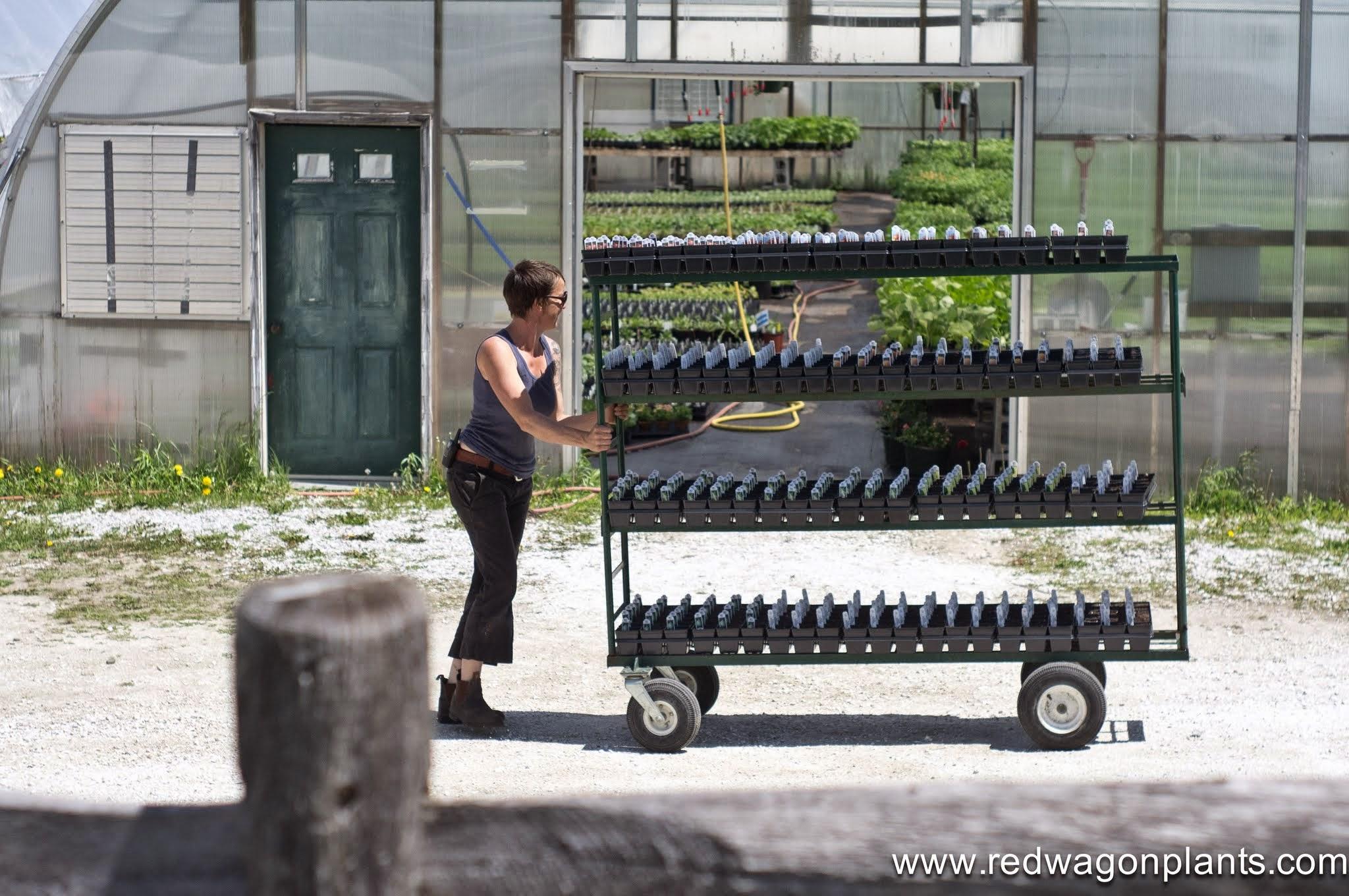 allison with cart.jpg
