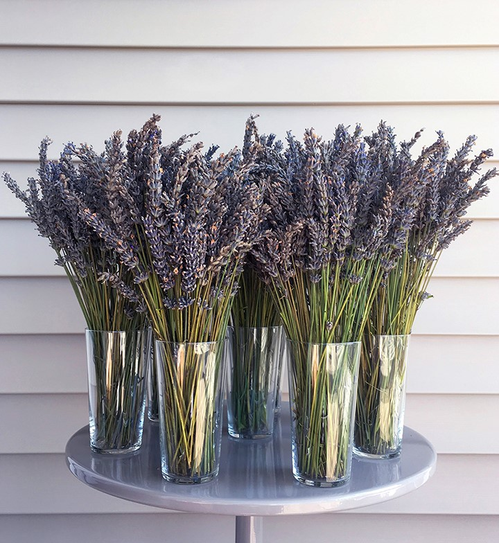 Lavender small from Joannah Ralston.jpg