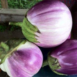 Eggplants -