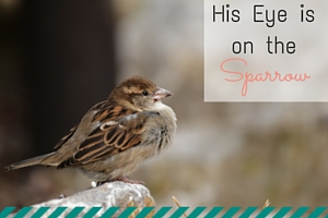 His Eye is on the Sparrow - An Everyday Mom