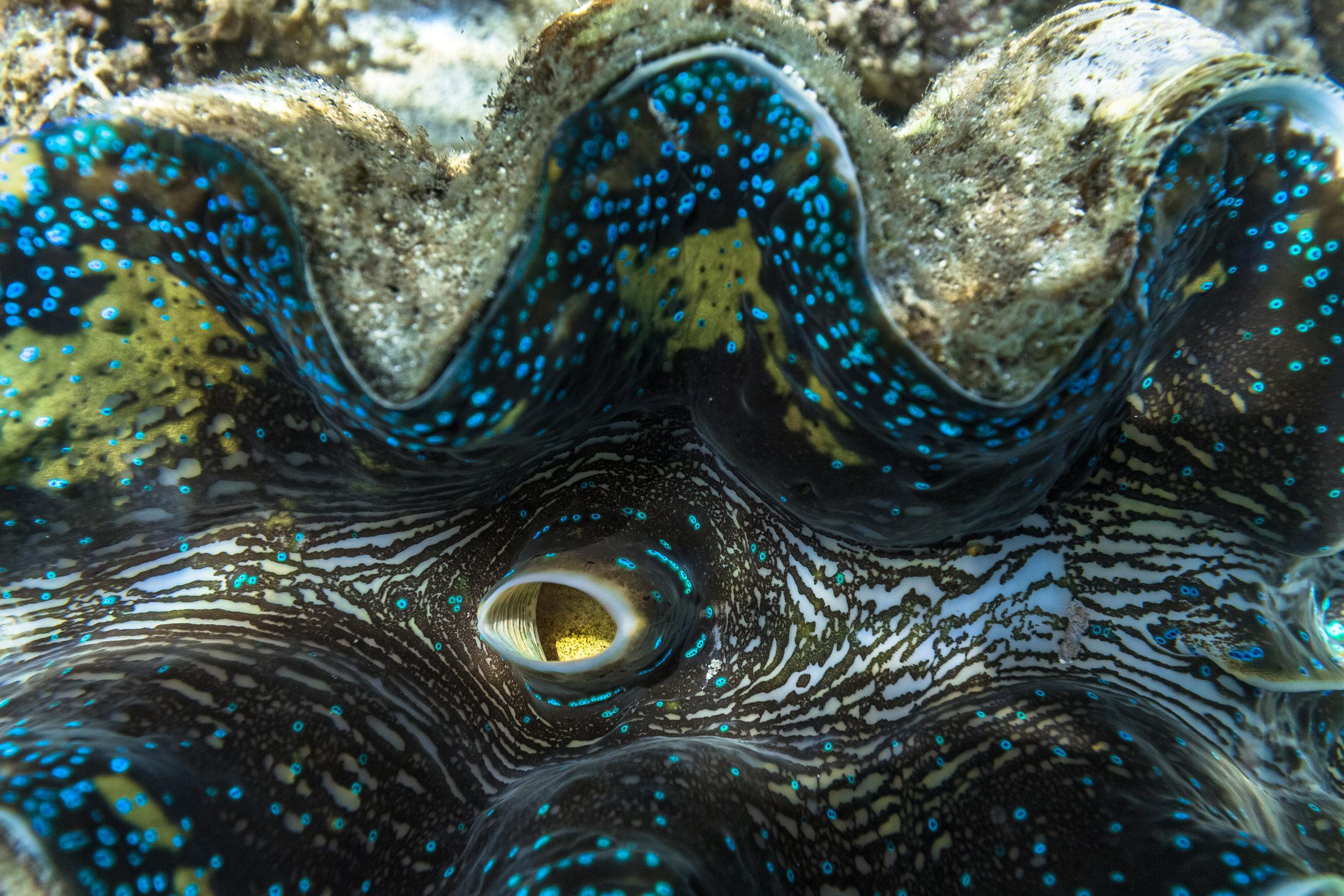 coral_at_papatura-6550-170318-Ryan_Chachi_Craig.jpg