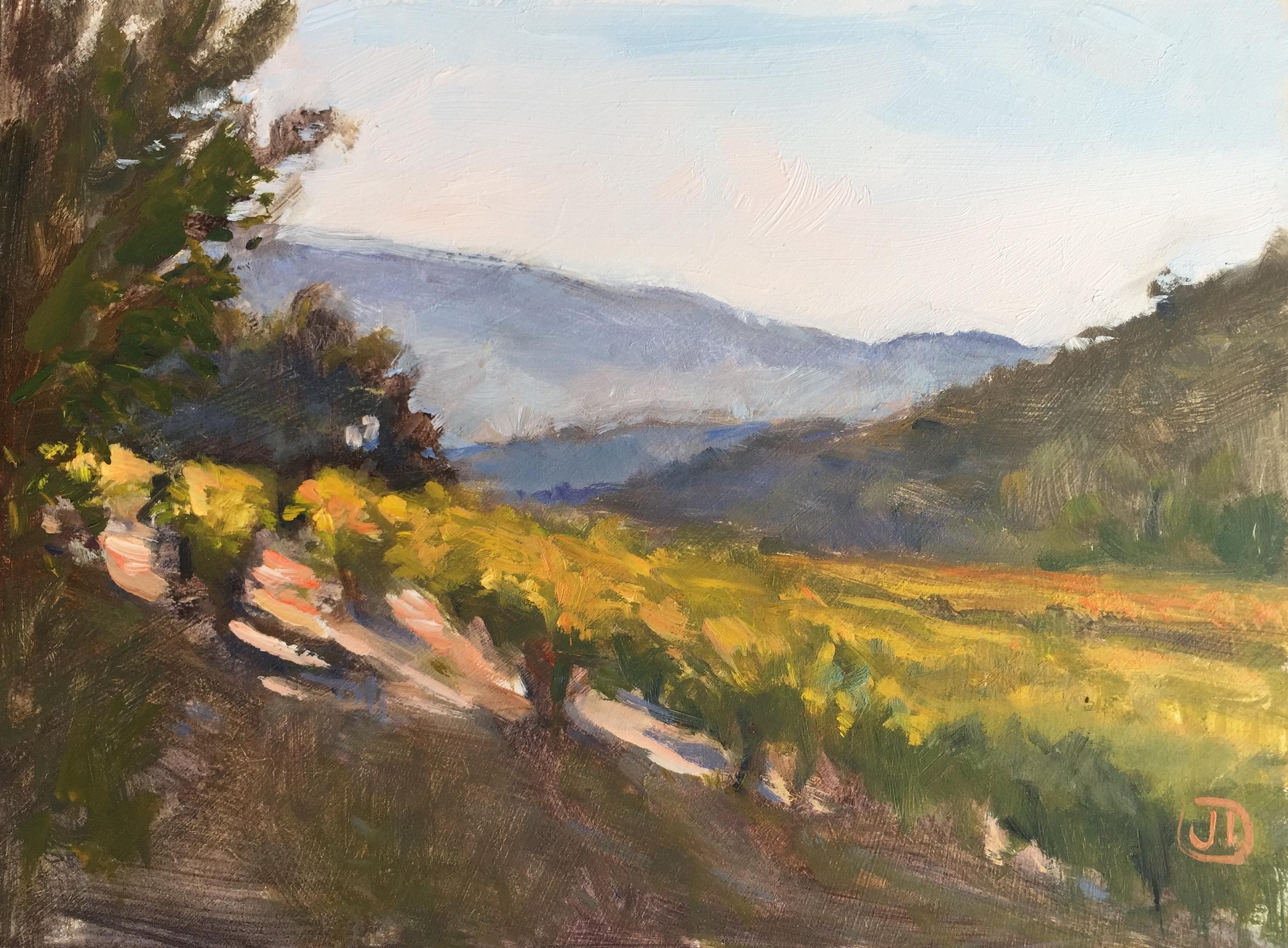 Morning Light on Autumn Vineyards