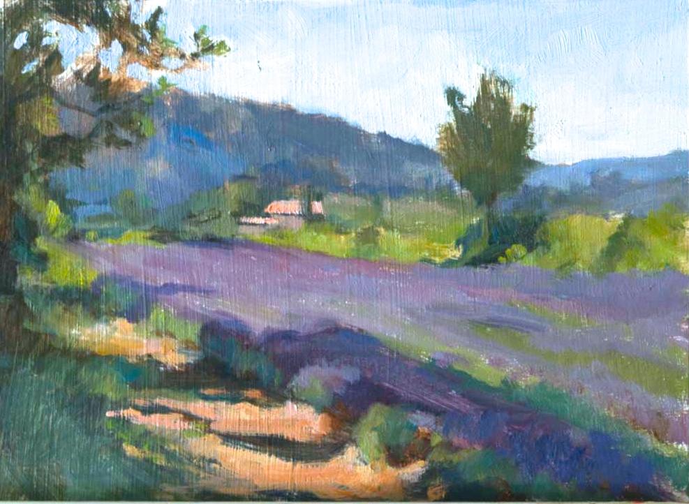 Lavender Field on a Summer Morning