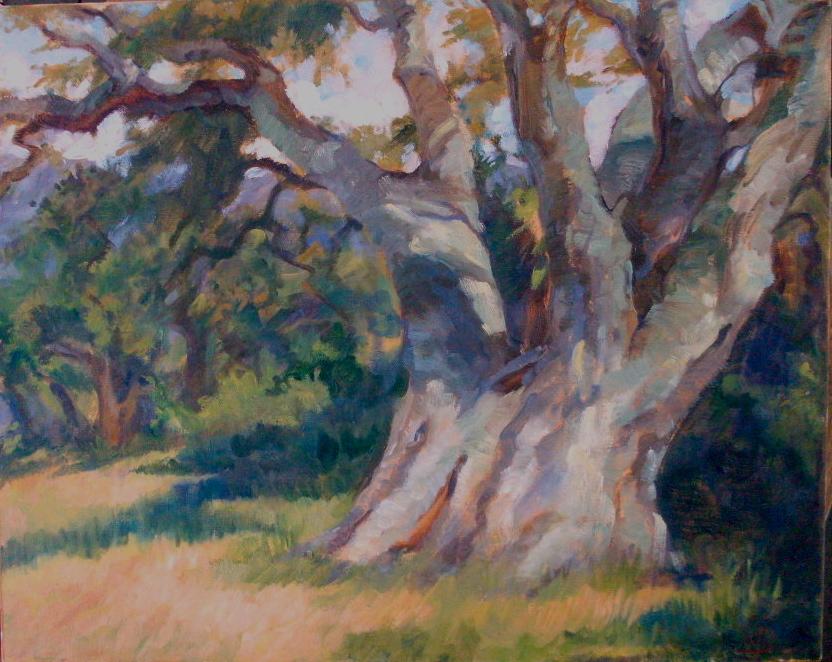 The Matriarch, Oak in Big Sur